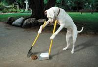Организация площадок для выгула собак может стать необязательной для управляющих компаний