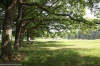 Про парки в Великом Новгороде