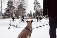 Интервью: Консультант мэрии финского Оулу — о зимнем велодвижении