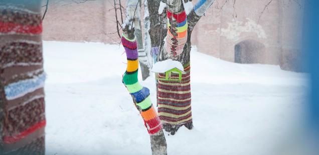 Новгородские деревья снова приоделись