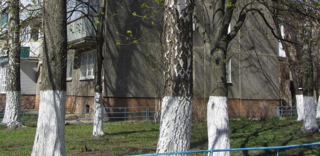 А вдоль дорог деревья белые стоят
