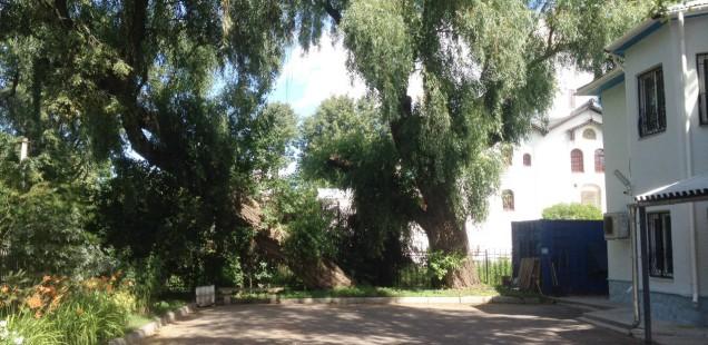 Как пилят историю в Великом Новгороде